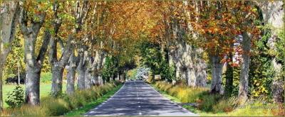 Route de platanes Provence